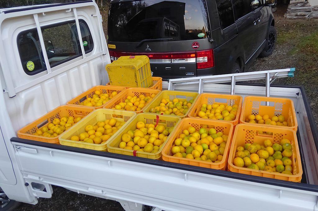 トラックに積まれた収穫後のゆず